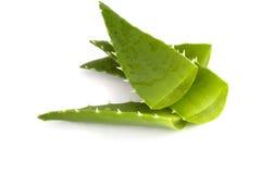 Aloe vera Immagini Stock