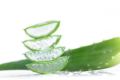 Aloe vera. Fresh leaves of aloe vera plant isolated on white Royalty Free Stock Photos