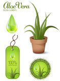 Aloe Vera. Plant, design elements Royalty Free Stock Images