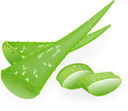 Aloe-vera. Royalty Free Stock Images