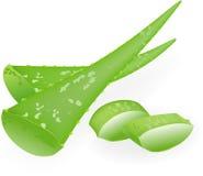 Aloe-vera. Royalty Free Stock Images