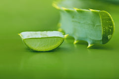 Aloe vera. Leaves on a green background Stock Photos