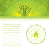 Aloe Vera Royalty Free Stock Photo