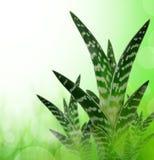 Aloe Vera stockbild