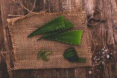 Aloe vera Fotografia Stock