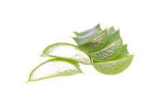 Aloe vera Immagine Stock