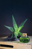 Aloe Vera Lizenzfreies Stockfoto