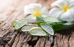 Aloe vera affettata Fotografia Stock