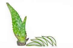 Aloe Vera affettata ed intera Fotografia Stock Libera da Diritti