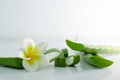 Aloe Vera affettata, isolato su un fondo bianco per salute Fotografia Stock Libera da Diritti