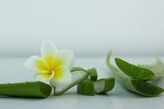 Aloe Vera affettata, isolato su un fondo bianco per salute Immagini Stock