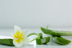 Aloe Vera affettata, isolato su un fondo bianco per salute Immagine Stock Libera da Diritti