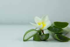 Aloe Vera affettata, isolato su un fondo bianco per salute Immagine Stock