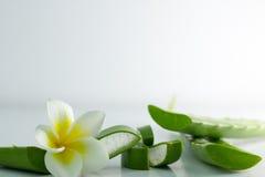 Aloe Vera affettata, isolato su un fondo bianco per salute Fotografie Stock