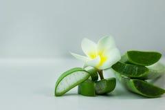 Aloe Vera affettata, isolato su un fondo bianco per salute Fotografia Stock