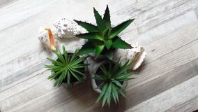 Aloe Vera and Agave Plant in Flowerpots Home Decoration and Seashells. Aloe Vera and Agave Plant in Flowerpots and Seashells on Wooden Board. Artificial Plants royalty free stock photos