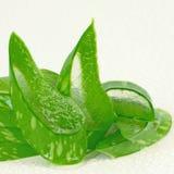 Aloe Vera (Aloe barbadensis Mill.) a very useful herbal medicine Royalty Free Stock Images