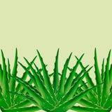 Aloe-Vera-Betriebshintergrund Stockbilder