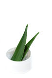 Aloe Vera-Blätter und Sahne Stockbild