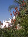 Aloe Vera blüht Frigiliana Spanien Stockbilder