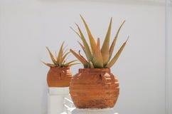 Aloe vera che coltiva nell'i vasi da fiori, stanti su una parete in un villaggio greco Fotografie Stock