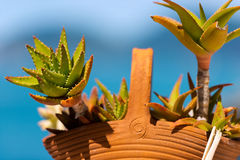 Aloe Vera Clay Pot - in Liguria Fotografia Stock