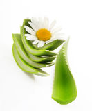 Aloe vera closeup Stock Image
