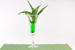 Aloe Vera. In a cocktail glass on a white background royalty free stock photography