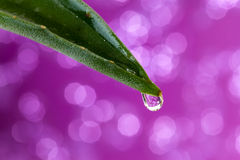 Aloe vera con goccia dell'acqua e priorità bassa lucida Fotografia Stock Libera da Diritti