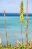 Aloe Vera con una vista Immagini Stock