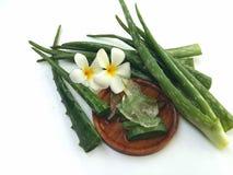 Aloe vera così fresca per la stazione termale e la bellezza su fondo bianco Fotografie Stock