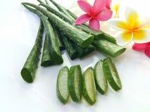 Aloe vera così fresca per la stazione termale e la bellezza su fondo bianco Fotografie Stock Libere da Diritti