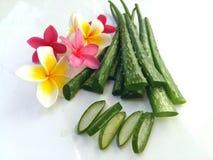 Aloe vera così fresca per la stazione termale e la bellezza su fondo bianco Fotografia Stock Libera da Diritti