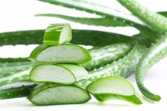 Aloe Vera. Stock Photos