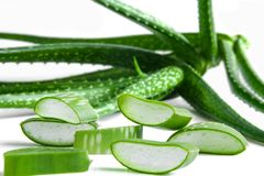 Aloe Vera. Royalty Free Stock Photography