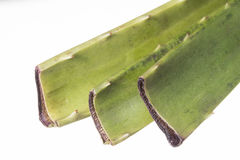 Aloe vera cuttings Stock Images