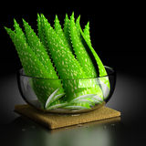 Aloe Vera. 3d rendering of the Aloe Vera Plant Royalty Free Stock Photography
