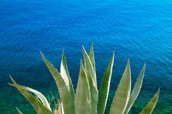 Aloe Vera dal mare Fotografia Stock