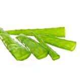 Aloe Vera di erbe. Fotografia Stock Libera da Diritti