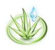 Aloe vera with droplets Royalty Free Stock Photos