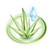 Aloe vera with droplets royalty free illustration