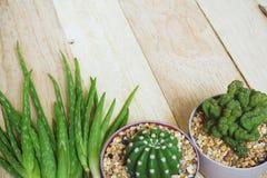 Aloe vera e cactus sul fondo di legno della tavola, spazio della copia, concetto di cura di pelle Fotografie Stock Libere da Diritti