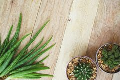 Aloe vera e cactus sul fondo di legno della tavola, spazio della copia, concetto di cura di pelle Fotografia Stock Libera da Diritti