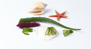 Aloe vera e conchiglie Fotografie Stock