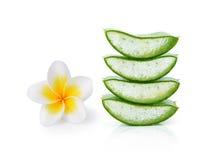 Aloe vera e fiore del frangipane Fotografie Stock Libere da Diritti