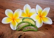 Aloe vera e fiore del frangipane Immagini Stock
