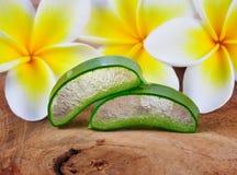 Aloe vera e fiore del frangipane Immagini Stock Libere da Diritti