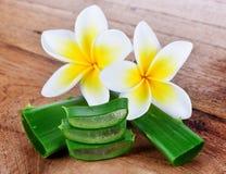 Aloe vera e fiore del frangipane Fotografia Stock