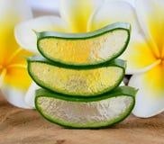 Aloe vera e fiore del frangipane Fotografia Stock Libera da Diritti