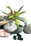 Aloe vera e pietre Fotografia Stock